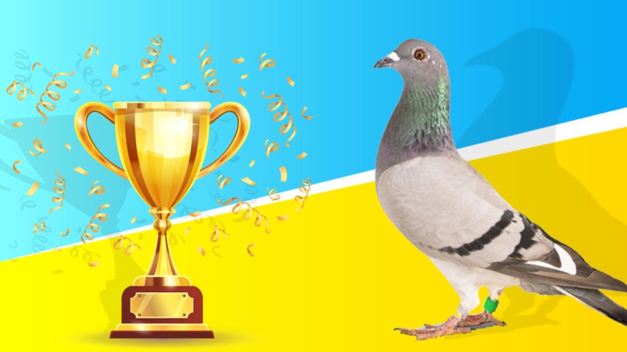Terugblik einde seizoen 2019 De Belser Johan Racing Pigeons Belgium